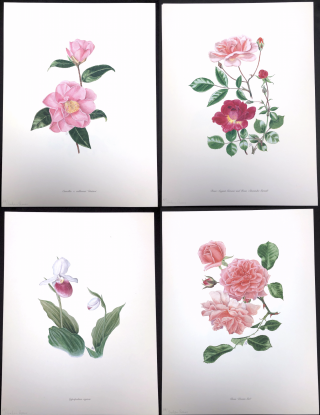 4 Botanical Lithographs by Graham Stuart Thomas, published by the Wayside Gardens, in original...