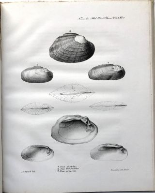 Observations on the Genus Unio, together with descriptions of new genera and species in the families Naiades, Conchae, Colimacea, Lymnaeana, Melaniana, and Peristomiana
