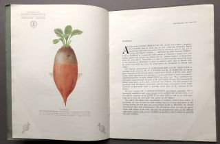 1916 catalogue: Choices Selected Danish Clover Seeds, Grass Seeds, Root Seeds, Seed Grains