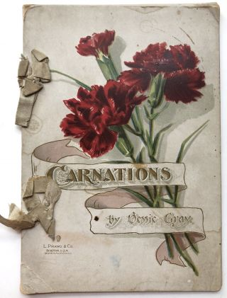 Carnations. Bessie Gray