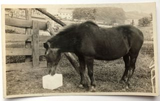 Photos of Coleman family members on a farm near Pittsburgh. Mary Moreland Coleman, James H. Coleman, children, etc.