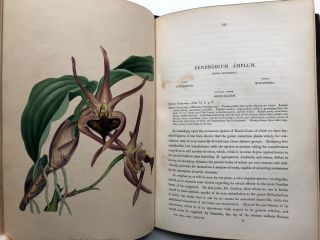 Paxton's Magazine of Botany, and Register of Flowering Plants, Vol. VII (Volume the Seventh)