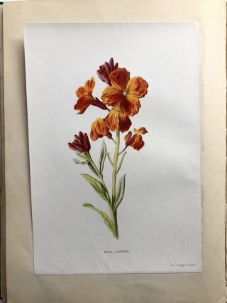Flower Painting in Water Colours, Second Series