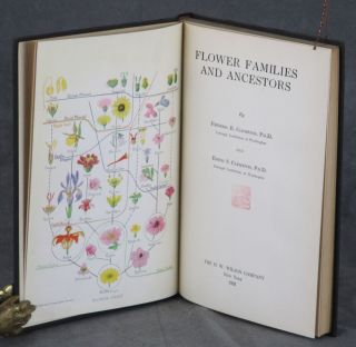Flower Families and Ancestors